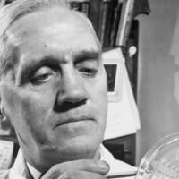 La penicilina, el antibiótico que revolucionó la medicina, cumple 90 años. Esta es su historia