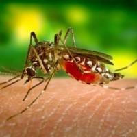Los casos de dengue en Colombia aumentaron más del 93% en comparación con el año anterior
